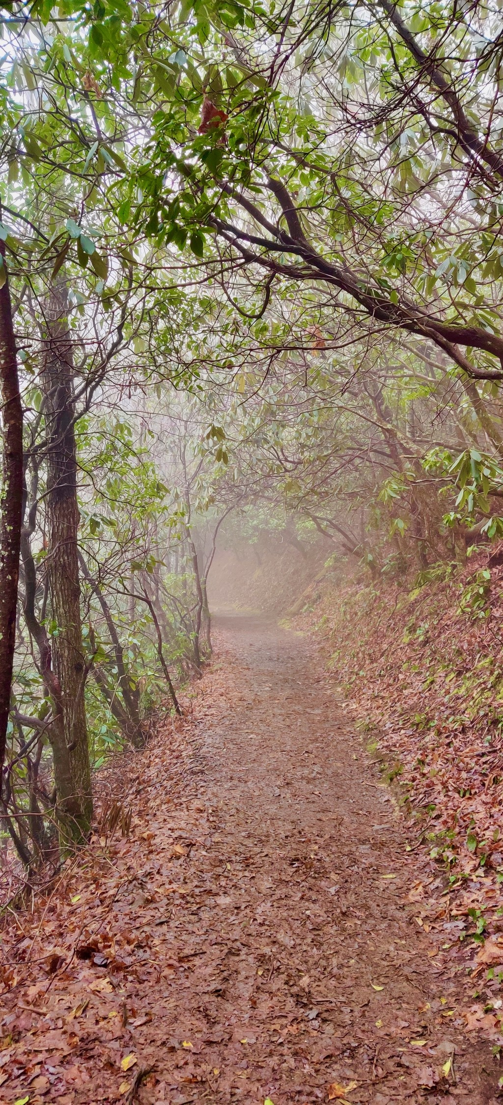Canopies + Foilage + Fog... Great Smoky Mountains. MemExp Blog