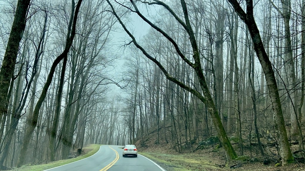 .... beautiful tree cano... Great Smoky Mountains. MemExp Blog